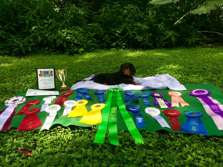 Showing+off+all+of+the+ribbons%2C+sophomore+Megan+Hamilton+and+her+dog+Derby+won+at+4-H+and+American+Kennel+Club+shows.+They+won+in+the+categories+of+High+Placements+in+Obedience%2C+Rally%2C+Agility+and+Junior+Showmanship.