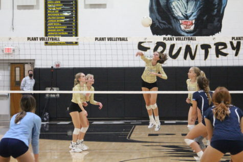 JV Girls Volleyball won against Berkeley on September 21. Plant won 2 sets, securing the win for Plant; the scores for the sets were 25-18 for the first set, 16-25 for the second, 15-9 for the third. The JV volleyball team now has a 3-0 record.
